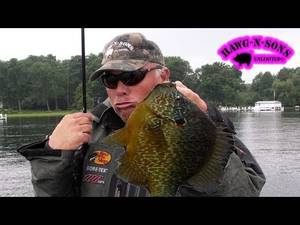 Best Fishing Porn - BEST Fishing BIGGEST Pumpkinseed Sunfish Fish Ever – Bluegill Panfish